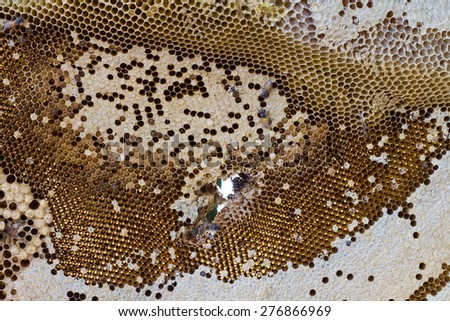 Background bee hive hem, which did not have a sweet honey which is porous in the middle. - stock photo