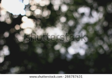 background blurred leaves on a tree