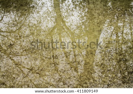background branches of trees reflected in the water