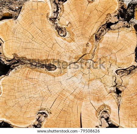 Background. close-up wooden cut texture - stock photo