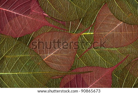 Background consisting of decorative leaves - stock photo