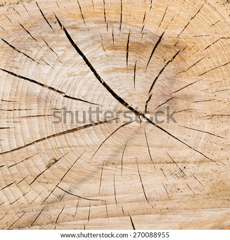 background - cracking in the wood - stock photo