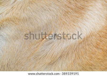 Background dog fur - stock photo
