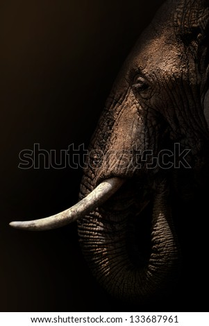 background elephant in the shade - stock photo