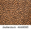 background fabric texture of animal print - stock photo
