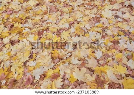 Background - fallen autumn leaves - stock photo