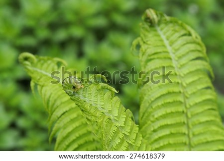 Background. Fern leaves - stock photo