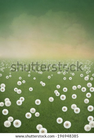 Background field of dandelions - stock photo