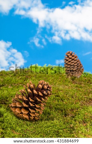 Background for fairytale or garden gnome scenes with pinecones - stock photo