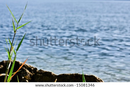 Background for greeting - soft-focus bamboo on water - stock photo