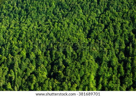 background forest view from above, green forest nature texture - stock photo