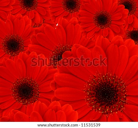 background formed by several red gerber flowers - stock photo