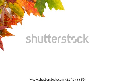 Background frame of isolated colorful autumn leaves top left corner perfect for a party or wedding invite or card - stock photo