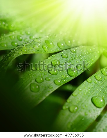 Background fresh and green with sun and waterdrops.