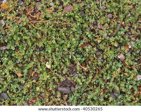 Background from a beautiful green grass and grey stones - stock photo