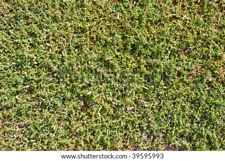 Background from a beautiful green sprouting green grass - stock photo