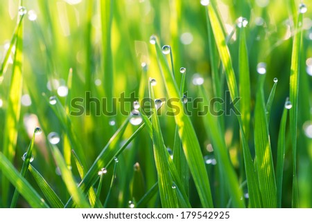 background from a green grass on a lawn with dew drops - stock photo