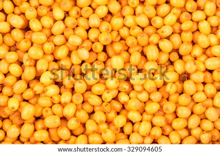 Background from a variety of scattered fresh sea buckthorn berries