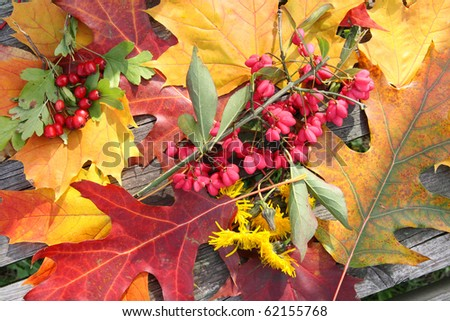 Background from autumn leaves and fruits on a wooden surface - stock photo