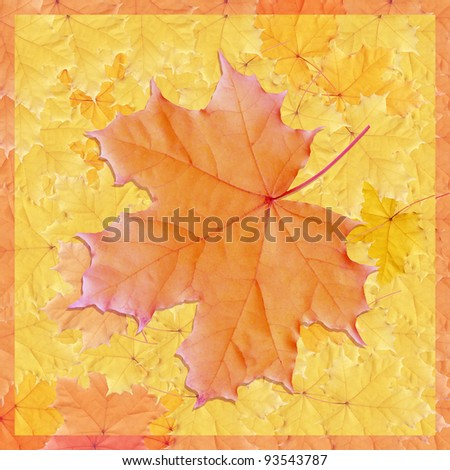 Background from autumn orange and yellow leaves of maple