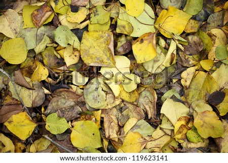 Background from autumn rotten leaves - stock photo