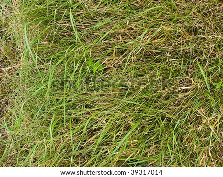 Background from beautiful green juicy length of a grass - stock photo