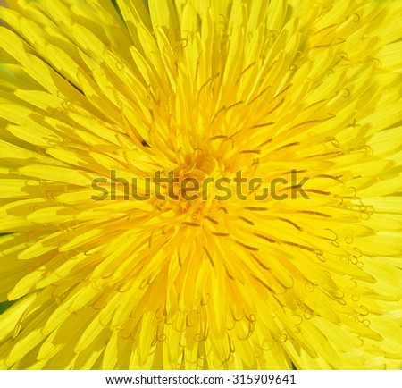 Background from dandelion - stock photo