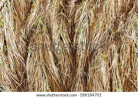 background from grass dried off - stock photo