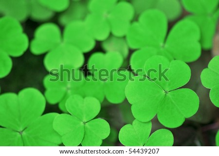 background from green clover leaf - stock photo