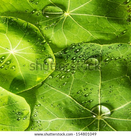 background from green dewy leaves - stock photo