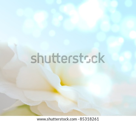 Background from petals of flower - stock photo