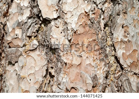 Background from pine bark - stock photo