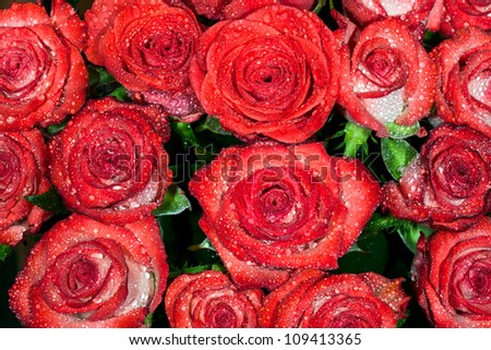 background from red wet roses with water droplets. macro - stock photo