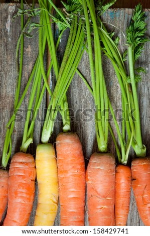background from ripe carrot