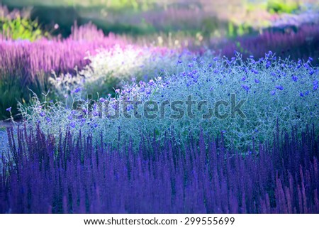 background from the blossoming plants - landscaping - stock photo