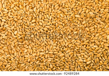 Background from the cereals combined together (wheat)