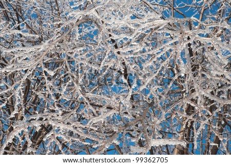 Background from the iced over branches of trees and the blue sky. The consequences of freezing rain - stock photo