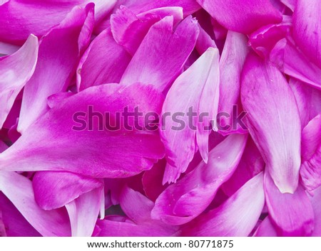 background from the pile of the petals of a pion - stock photo
