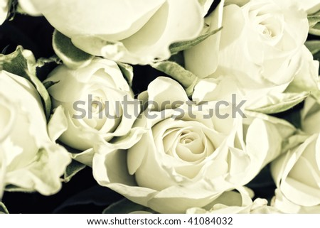 Background from white roses