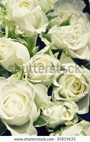 Background from white roses with green leaves
