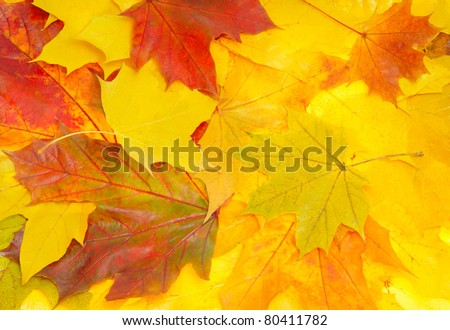 background from yellow and red autumn leaves - stock photo