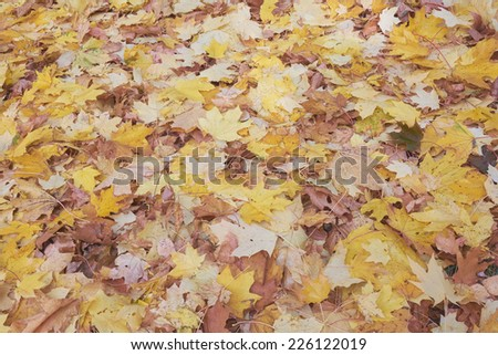 Background from yellow autumn leaves