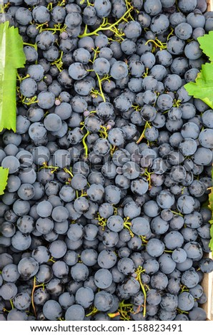 Background - full frame of black grapes with green leaves in wooden crates, ready for sale - stock photo
