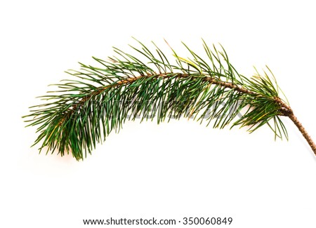 background - fur-tree branch - Christmas Tree