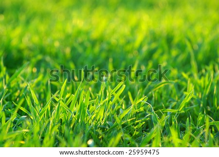 background green lawn freshly mowed