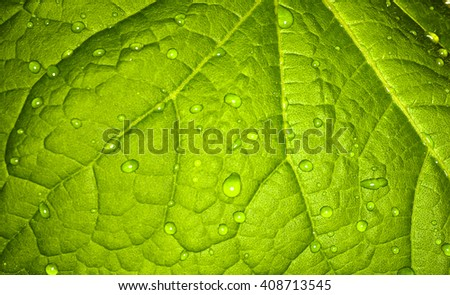 Background, green leaf of a plant.