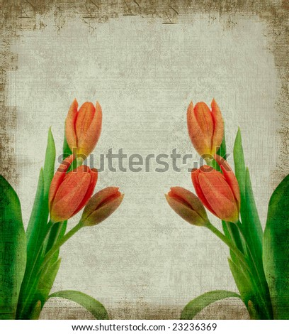 Background grunge of red tulips