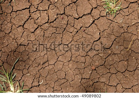 Background image of cracked earth texture with plants - stock photo
