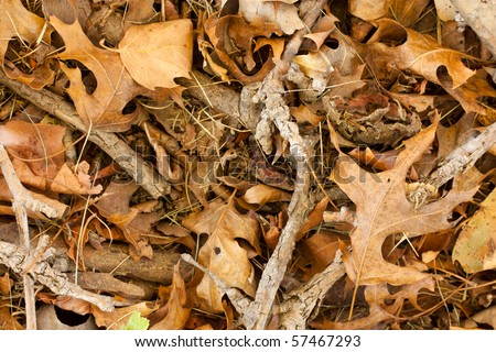 Background image of dry sticks and leaves - stock photo