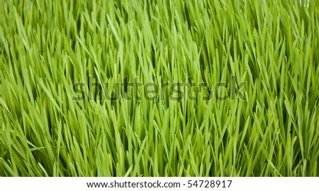 Background image of healthy green grass blades - stock photo
